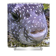 Blow Fish Close-up Shower Curtain
