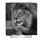 Blow You A Kiss  Black And White  T O C Shower Curtain