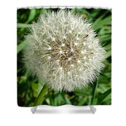 Blowball 1 Shower Curtain