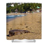 Blowfish Offshore  Shower Curtain