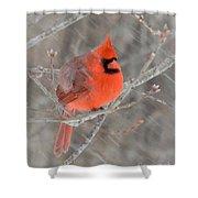 Blowing Snow Cardinal Shower Curtain