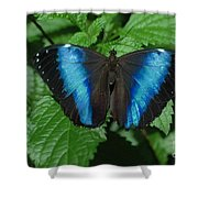 Blue And Black Shower Curtain