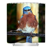 Blue And Brown Tanager Shower Curtain