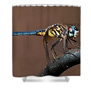 Blue And Gold Dragonfly Shower Curtain