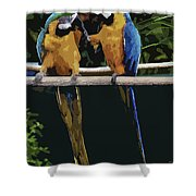 Blue And Gold Macaw 1 Shower Curtain