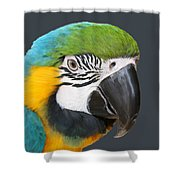 Blue And Gold Macaw Digital Freehand Painting Shower Curtain