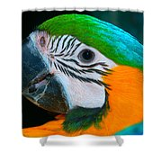 Blue And Gold Macaw Headshot Shower Curtain
