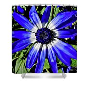 Blue And White African Daisy Shower Curtain