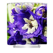 Blue And White Delphiniums Shower Curtain