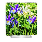 Blue And White Iris Shower Curtain