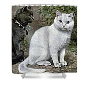 Blue And White Short Haired Cats Shower Curtain