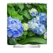 Blue And Yellow Hortensia Flowers Shower Curtain