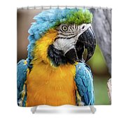Blue And Yellow Macaw Vertical Shower Curtain
