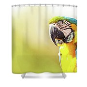 Blue And Yellow Macaw With Copy Space Shower Curtain