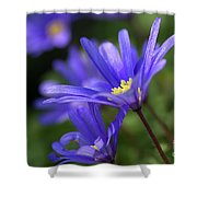 Blue Anemone  Shower Curtain