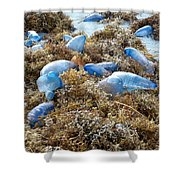 Seeing Blue At The Beach Shower Curtain by Karen Zuk Rosenblatt