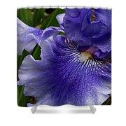 Blue Bearded Iris Shower Curtain