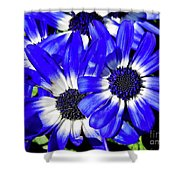 Blue Beauty Shower Curtain