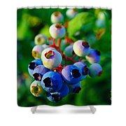 Blue Berries  Shower Curtain