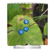 Blue Berries Shower Curtain