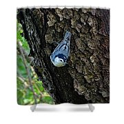 Blue Bird 1 Shower Curtain