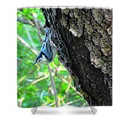 Blue Bird 2 Shower Curtain