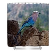 Blue Bird Shower Curtain