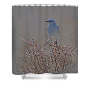 Blue Bird Colored Pencil Shower Curtain