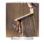 Blue Bird Couple Shower Curtain
