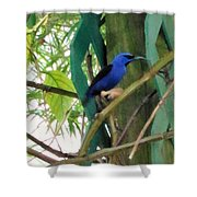 Blue Bird With A Curved Bill Shower Curtain