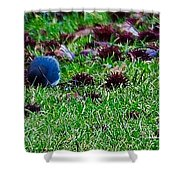 Blue Birds In Winter Shower Curtain