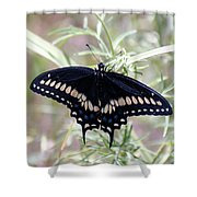 Blue Black Swallowtail Shower Curtain