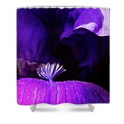 Blue Blue Iris Shower Curtain