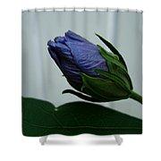 Blue Bud Shower Curtain