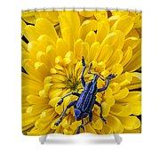 Blue Bug On Yellow Mum Shower Curtain