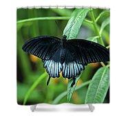 Blue Butterfly II Shower Curtain