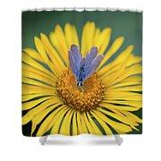Blue Butterfly On Alpine Sunflower Shower Curtain