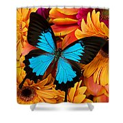 Blue Butterfly On Brightly Colored Flowers Shower Curtain by Garry Gay