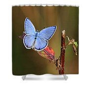 Blue Butterfly On Leaf Shower Curtain