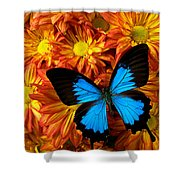 Blue Butterfly On Mums Shower Curtain