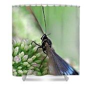 Blue Butterfly On Sedum Shower Curtain