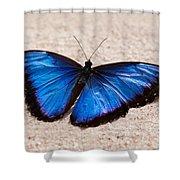 Blue Buttterfly Shower Curtain