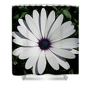 Blue Center Daisy Shower Curtain