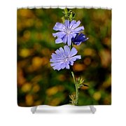 Blue Chicory 2 Shower Curtain