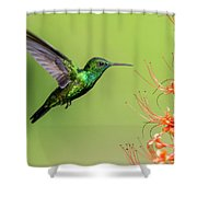 Blue Chinned Sapphire Shower Curtain