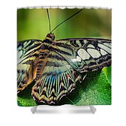 Blue Clipper - Looking Up Shower Curtain