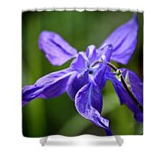 Blue Columbine Shower Curtain