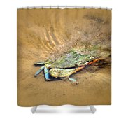 Blue Crab Hiding In The Sand Shower Curtain