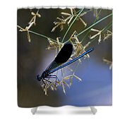 Blue Damsfly Shower Curtain