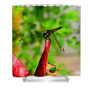 Blue Dasher Damselfly Shower Curtain